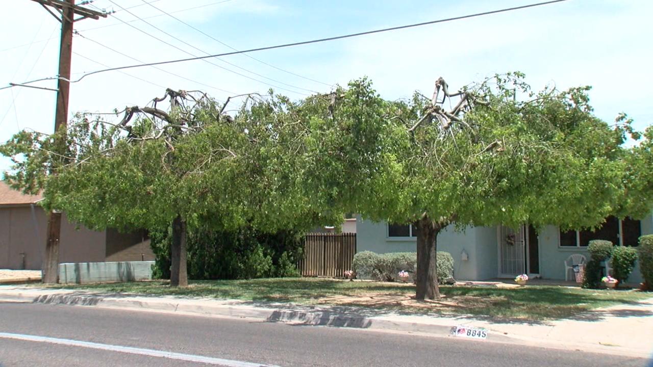 KNXV Homeowner Upset at SRP Tree Trimming