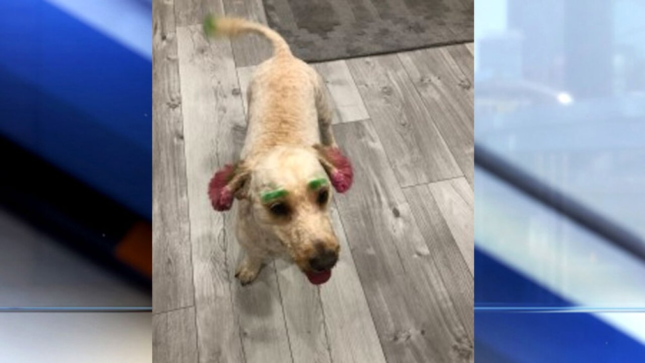 Lake Worth Beach woman\'s dog dyed green and pink in bizarre ...