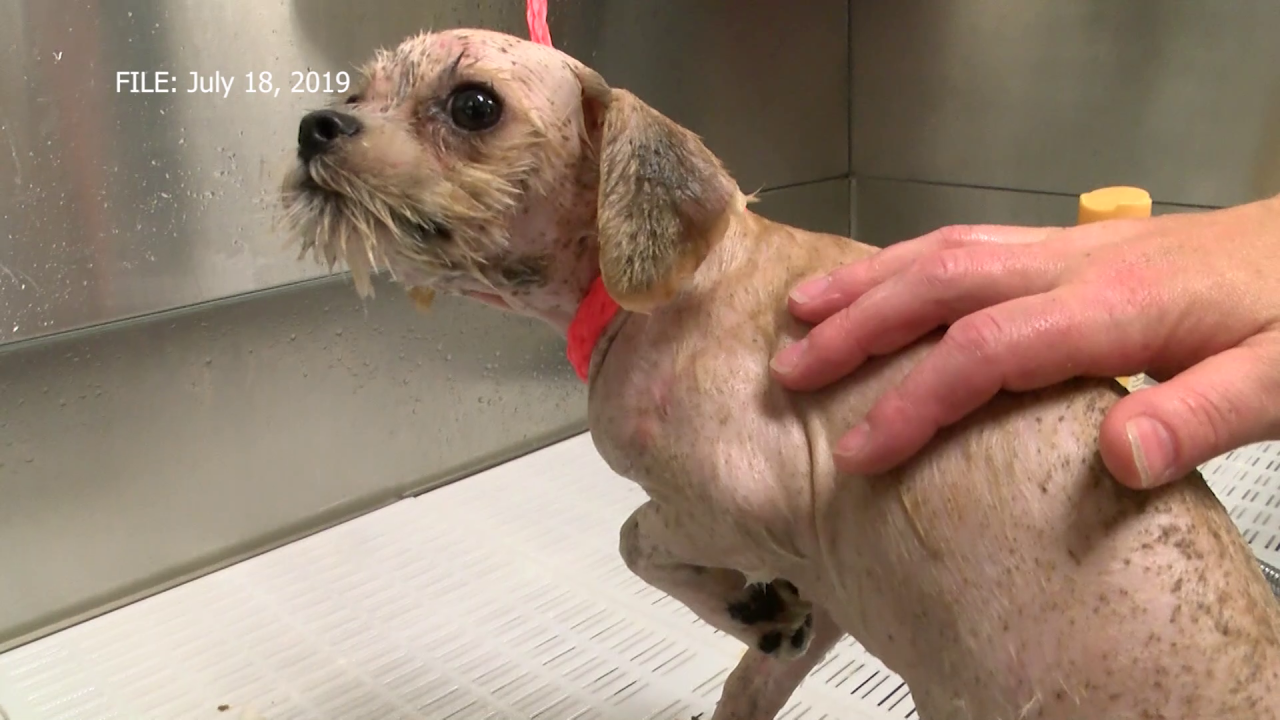 """""""Louse Dogs"""" at Helena shelter are on the mend"""