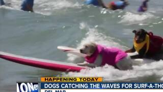 Dogs catch waves for surf-a-thon