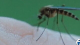 Consumer Reports names top insect repellents