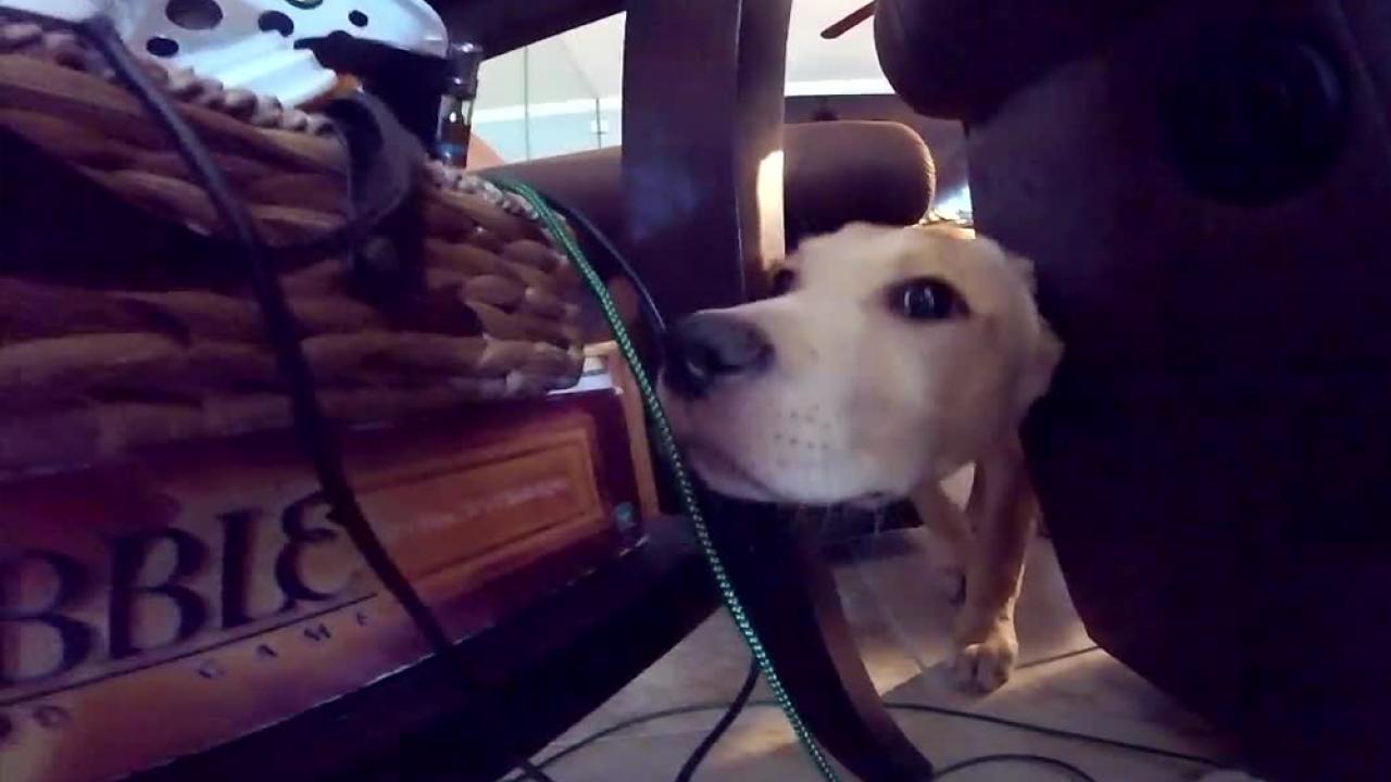 service-dog.png