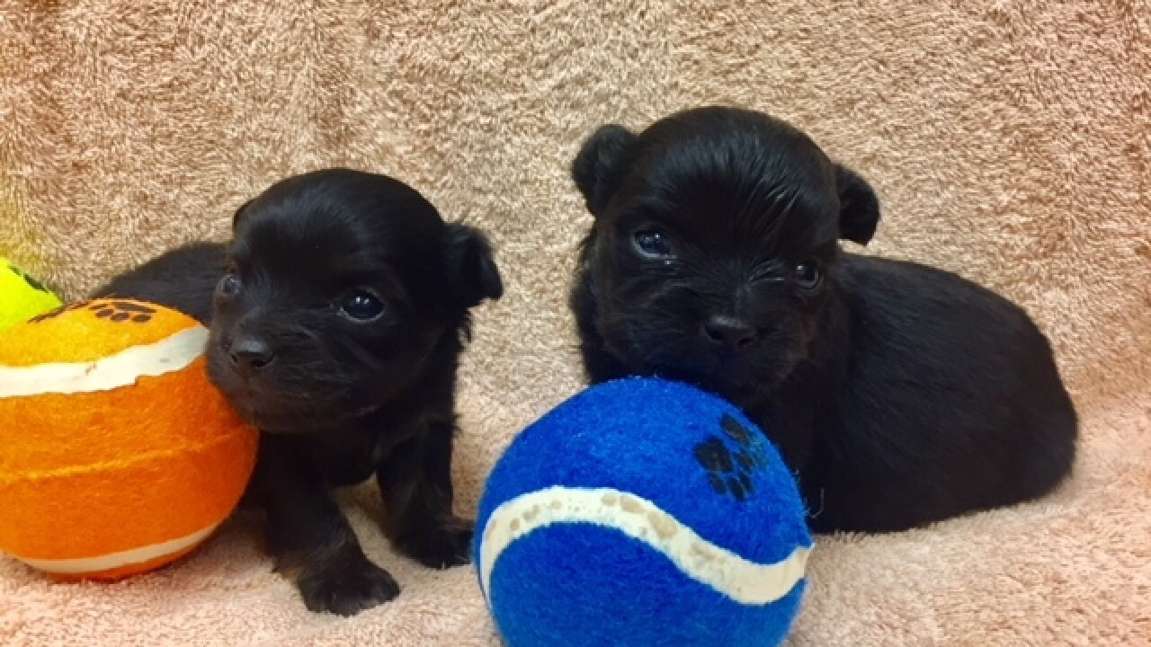Two puppies found in box in Midway-area dumpster