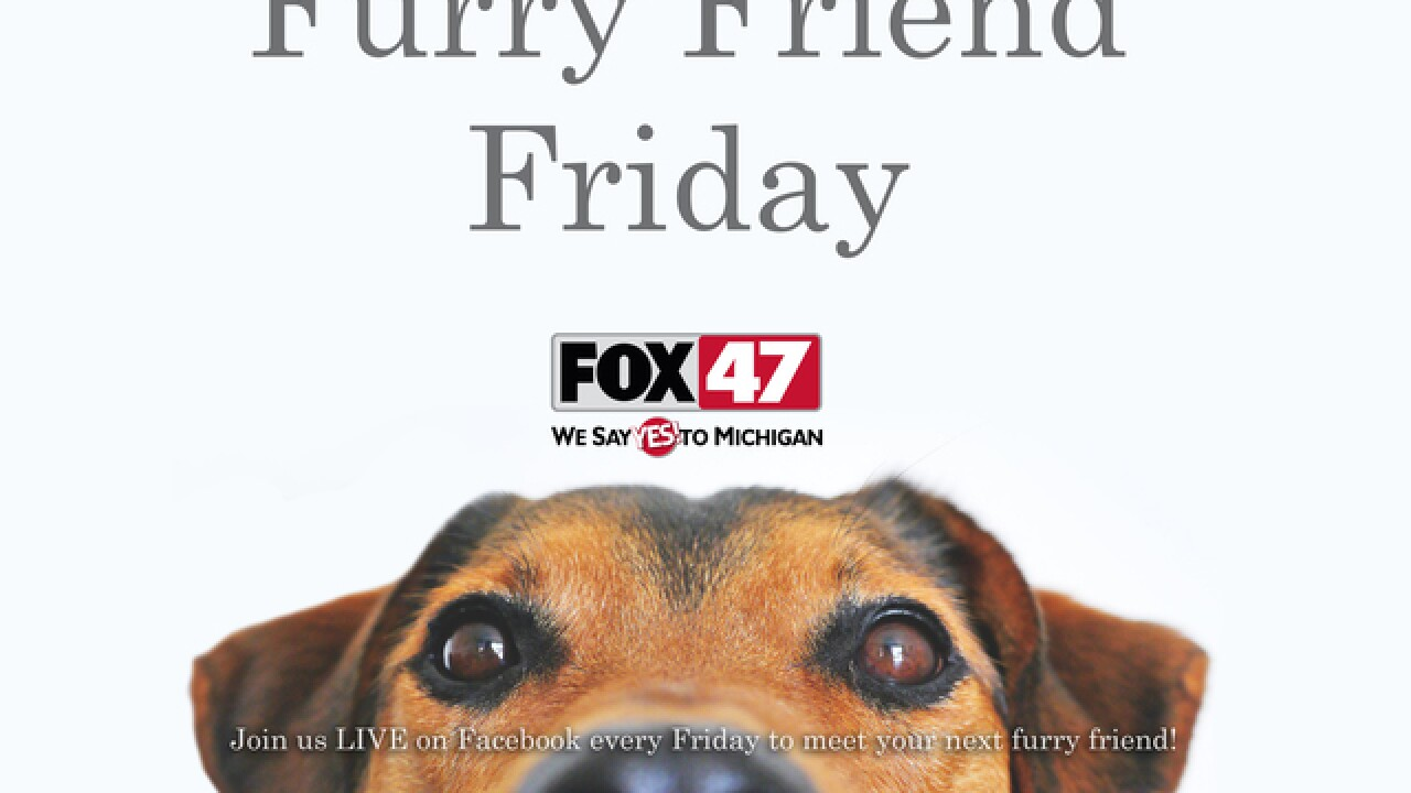 Furry Friends Available-Capital Area Humane Soc.
