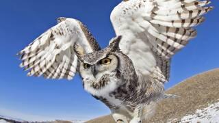 BU-on-glove-wings-open.jpg