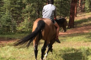Sophia Tang_Colorado Trail_horse