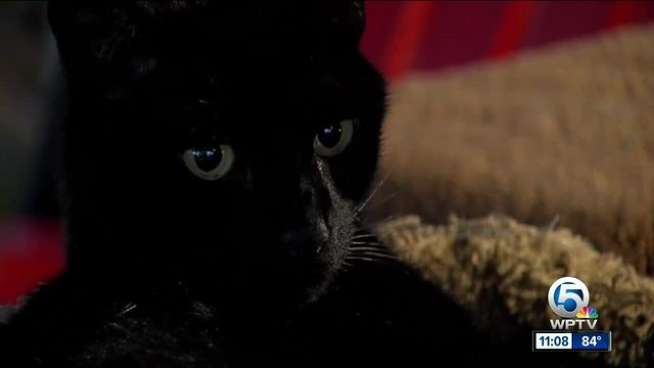 Cats paralyzed, put down after being shot by pellet gun in Florida