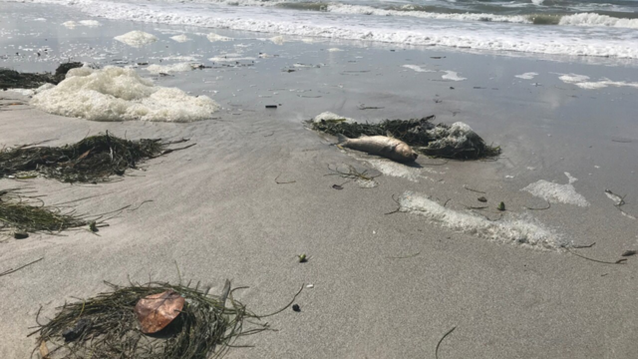 Crews remove dead fish from Pinellas Co. beaches