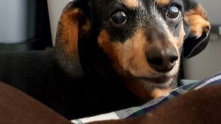 PHOTOS: Viewers submit pet photos for National Pet Day