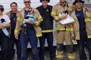 Annaville Fire Department-Nueces County ESD #1 puppies saved.jpg