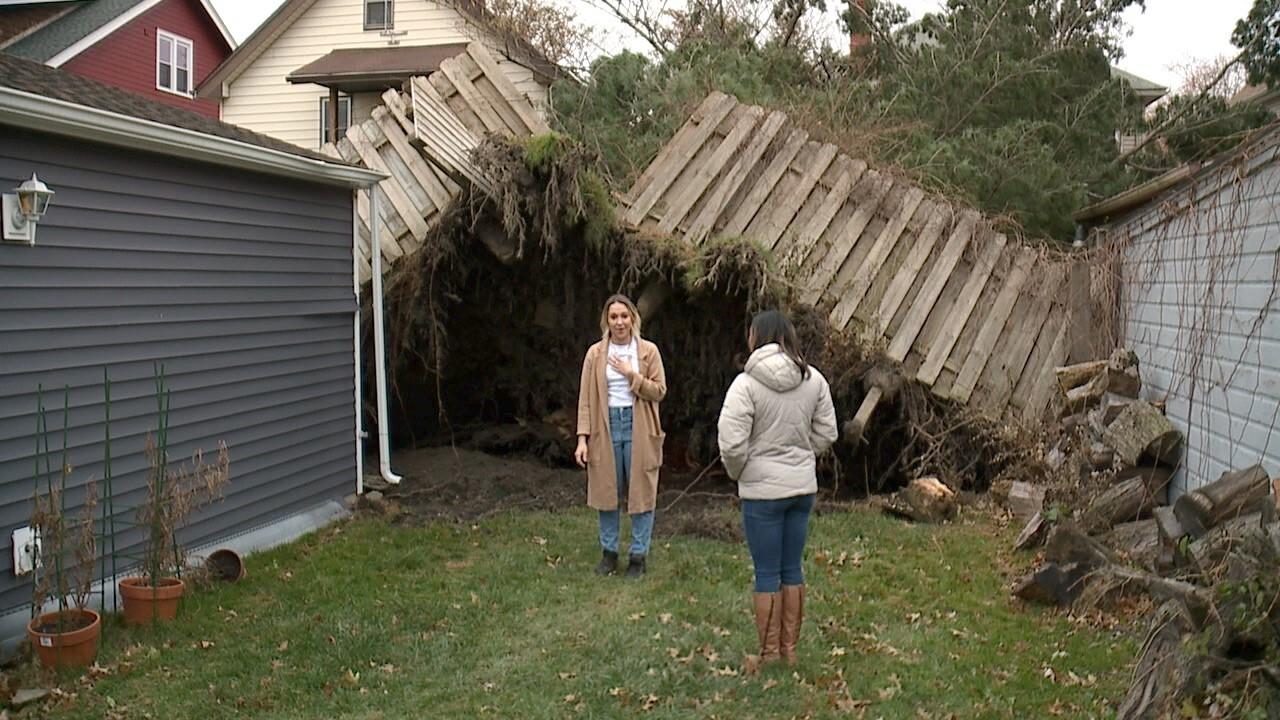 Lakewood Fallen Tree