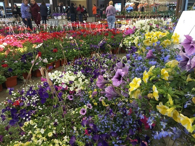 Photo Gallery: Best of 2017 Flower Day at Eastern Market