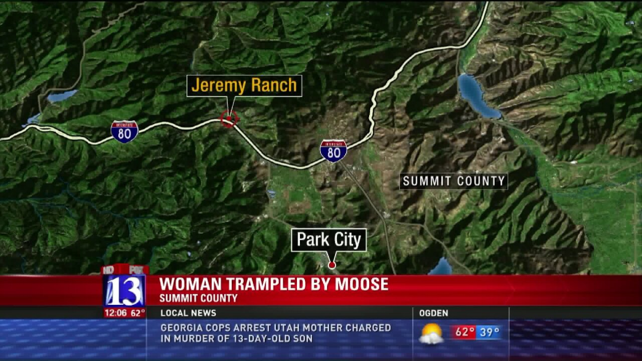 Wildlife officials searching for moose after woman trampled on trail in Summit County