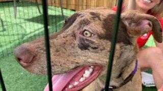 dog-rescued-from-hurricane-ida-WFTS-ERIK-PKG.jpg