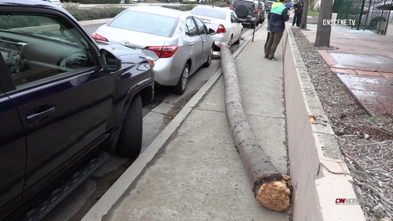 la jolla palm tree hits car