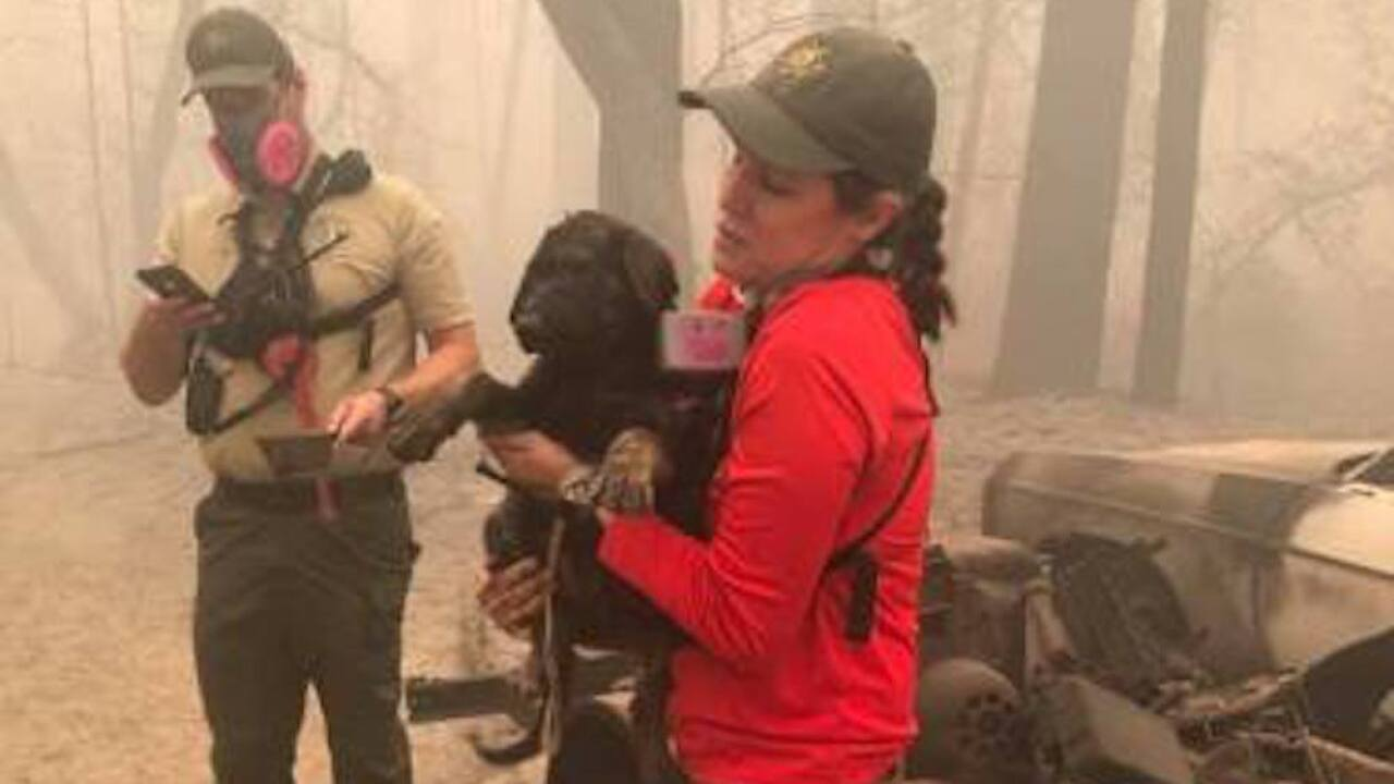 Puppy rescued from ashes of North Complex Fire in Northern California