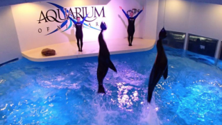 Aquarium of Niagara closed Saturday