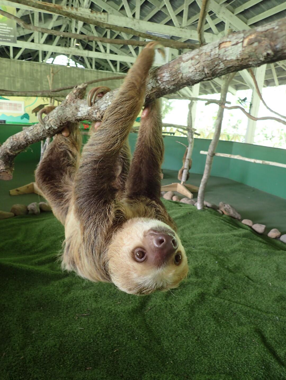 Baby Sloths (28).JPG