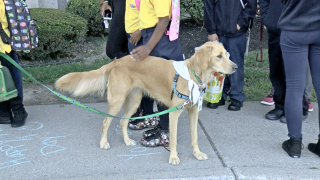 CSAT welcomes new therapy dog