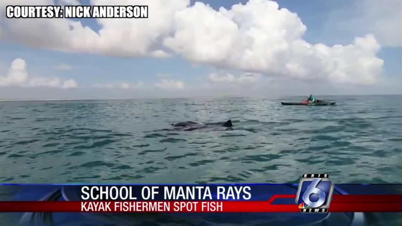 Stunning manta ray footage shot off PINS coast