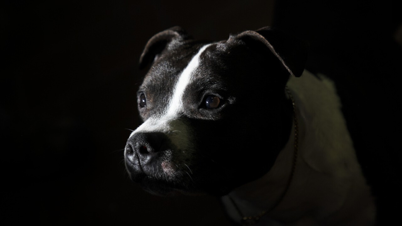 Castle Rock Town Council repeals ban on pit bulls