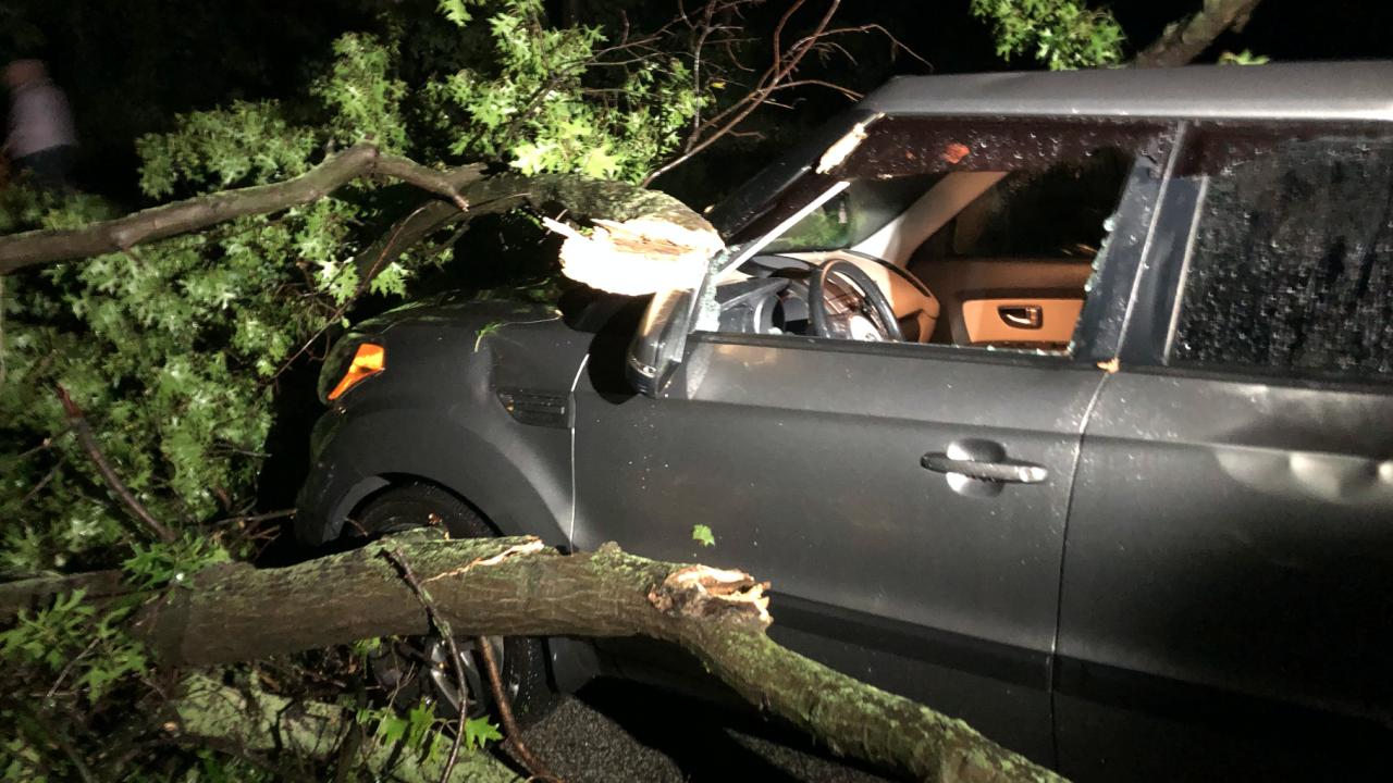 Storm damage Shaker Heights