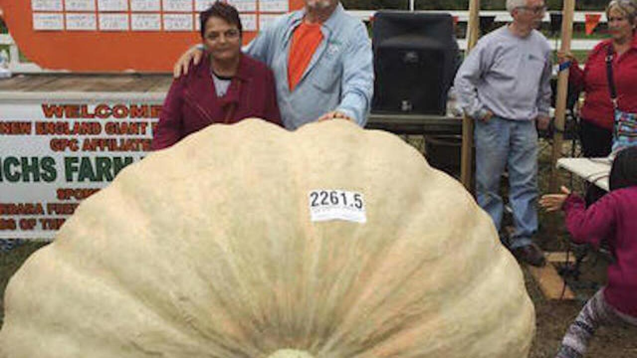 Pumpkin in California weighs in at nearly 1 ton