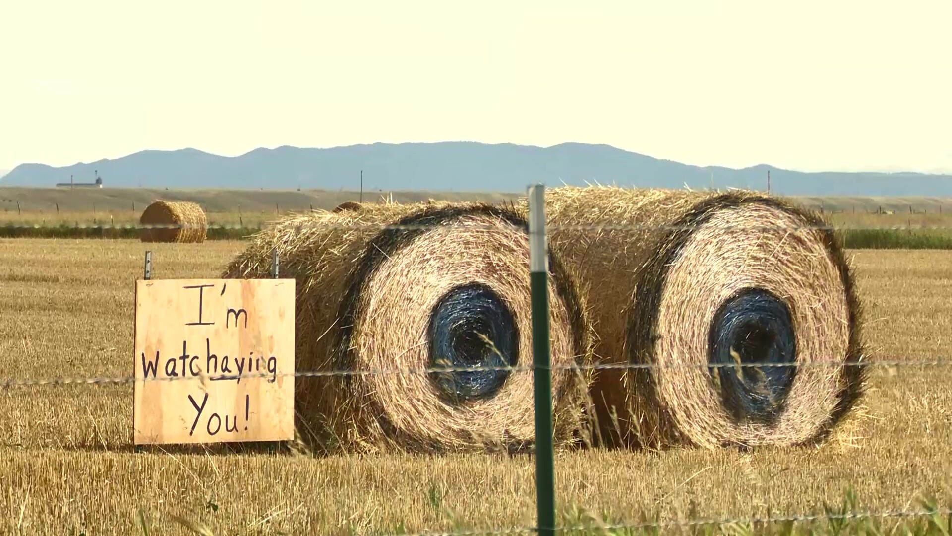 """What The Hay"" in Central Montana"