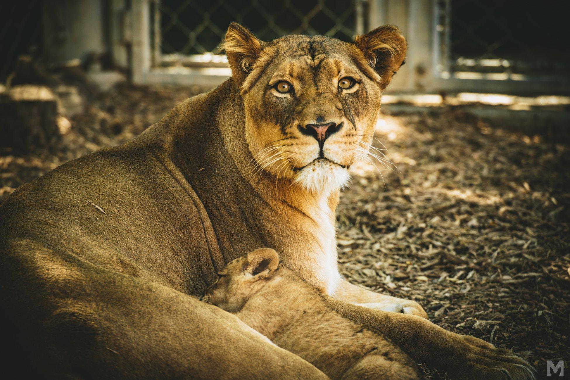 Lion Cub_14_Molly McCormick.jpg