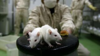 EPA says it will eliminate animal testing by 2035