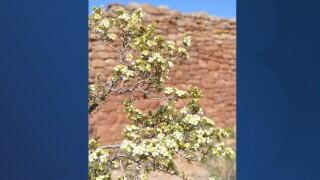 Flowers in the desert.jpg