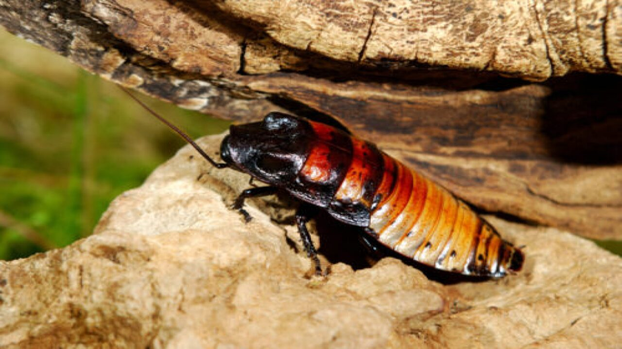 This Valentine's Day, You Can Have A Cockroach Named After Your Ex And Fed To A Zoo Animal