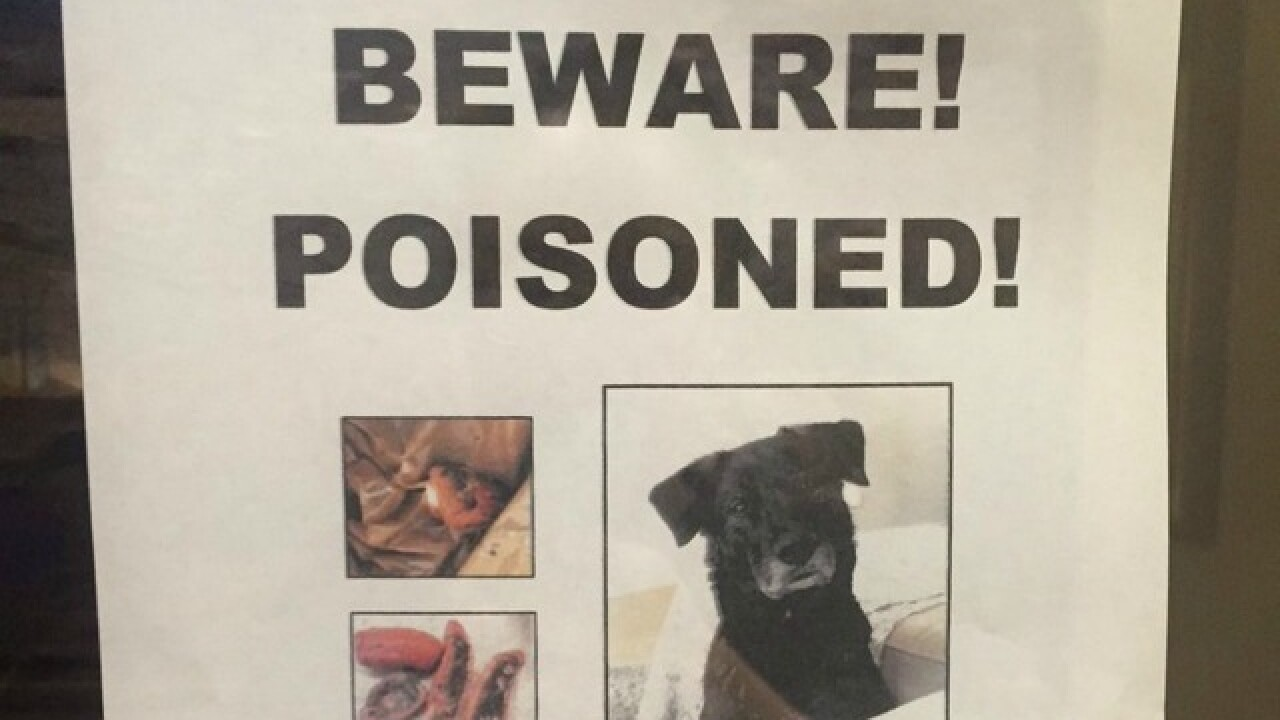 Three dogs poisoned to death in Chula Vista