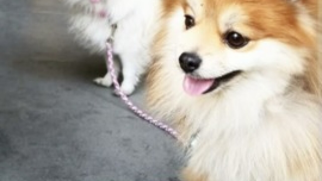 Las Vegas woman upset killer dog left with owner