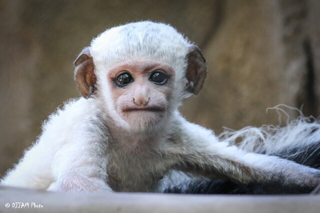 The adorable faces of 2018 Cincinnati Zoo Babies