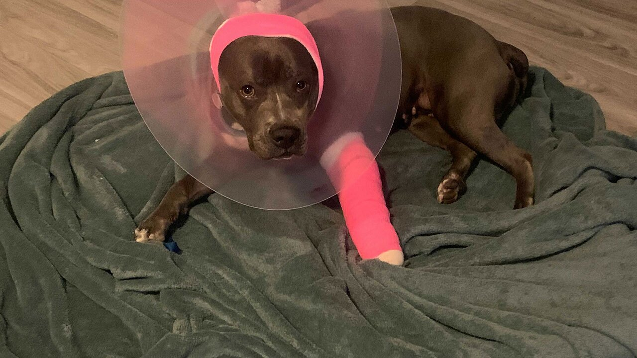 injured-dog2.jpg