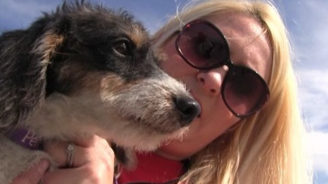 56 dogs rescued from Texas arrive in Fox Valley