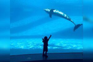 Sensory Sensitive Sunday returning to Texas State Aquarium