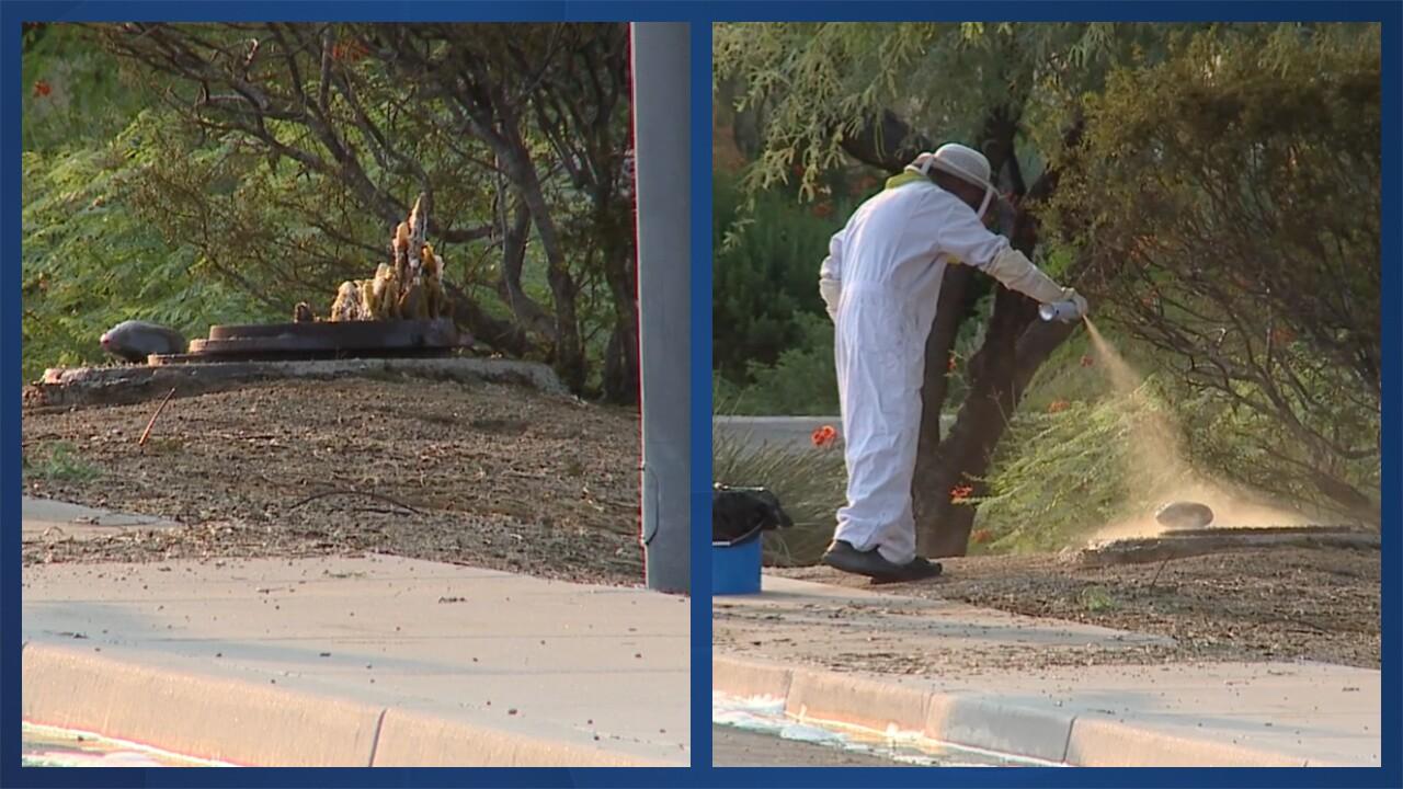 Scottsdale bee attack.jpg