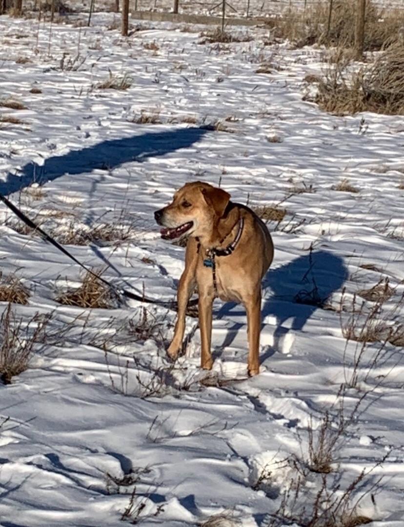 Josh Hall dog_Missing since Feb 3 2021