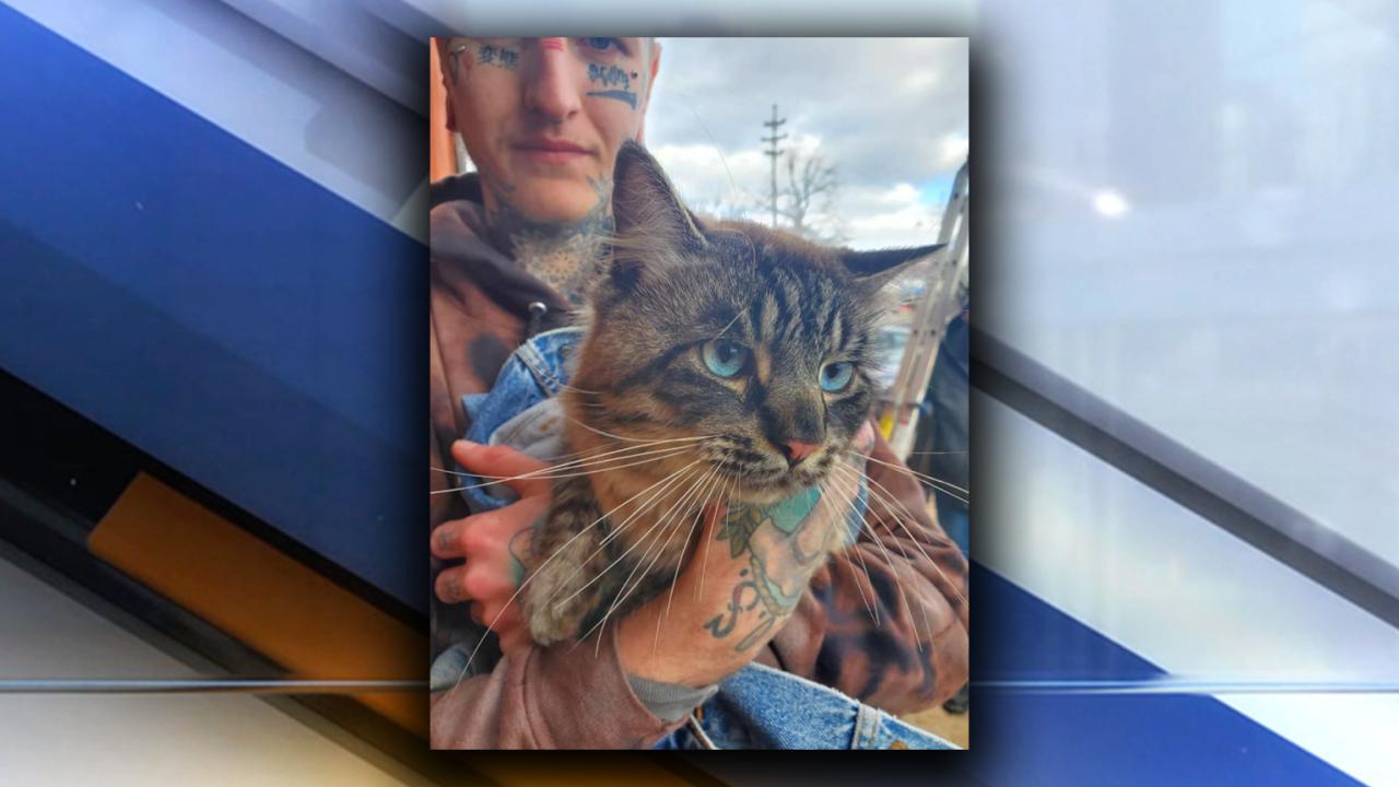 Akron tattoo shop cat rescue