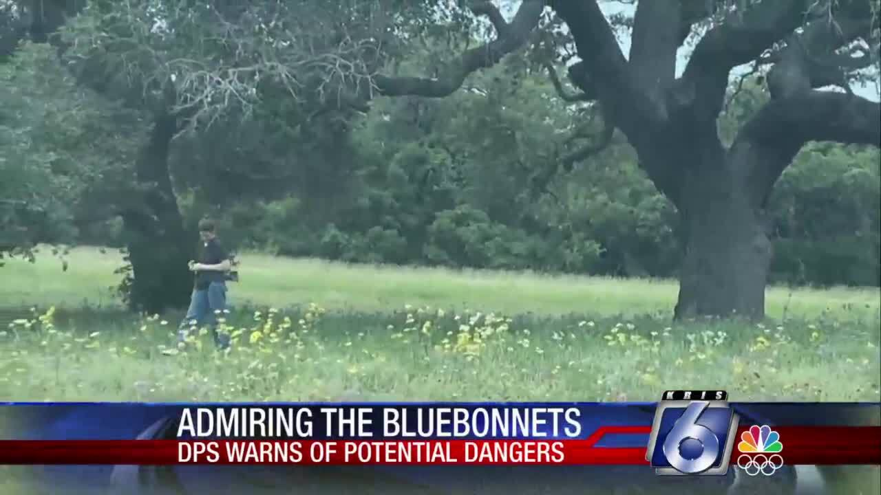Be careful if you are taking family bluebonnet pictures