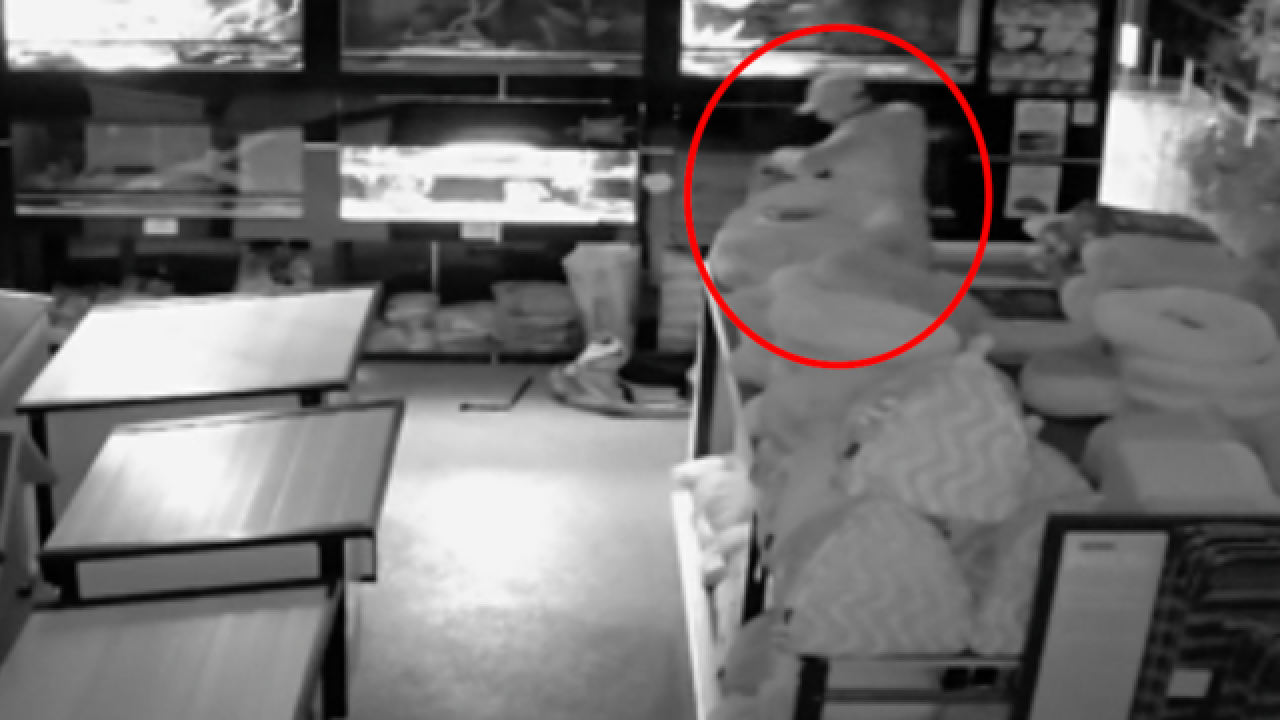 Watch: Man steals $9,000 worth of snakes from pet store