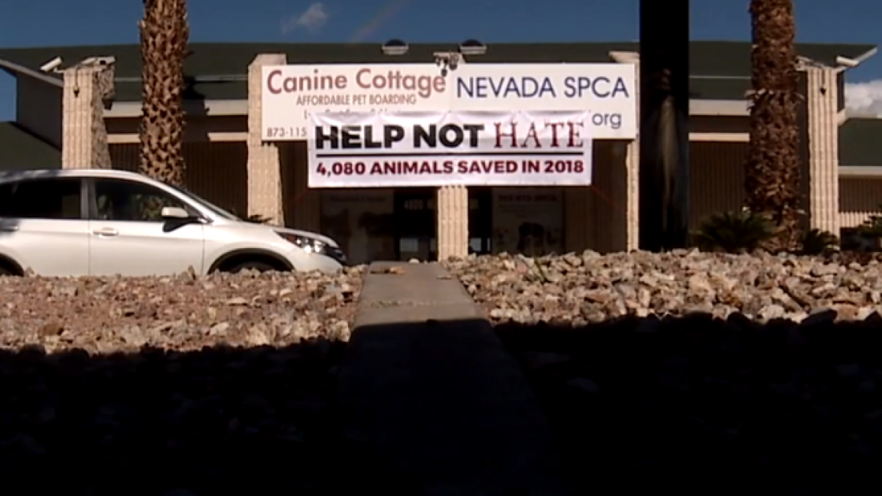 Humane Network releases plan for Nevada SPCA