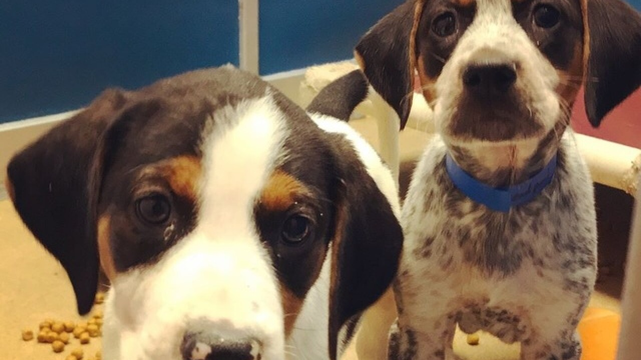 Wisconsin Humane Society Seeking Foster Parents