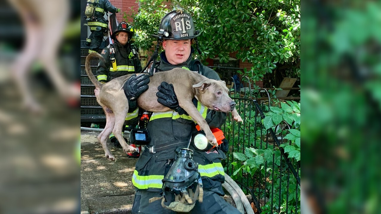 Firefighters rescue 6 dogs from burning Washington DC building