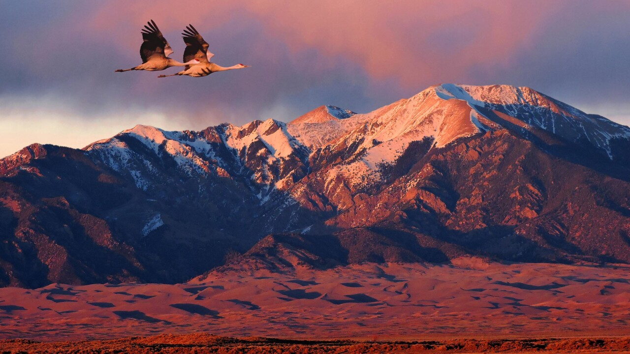 Wild Life at the Great Sand Dunes National Park and Preserve (4).jpg