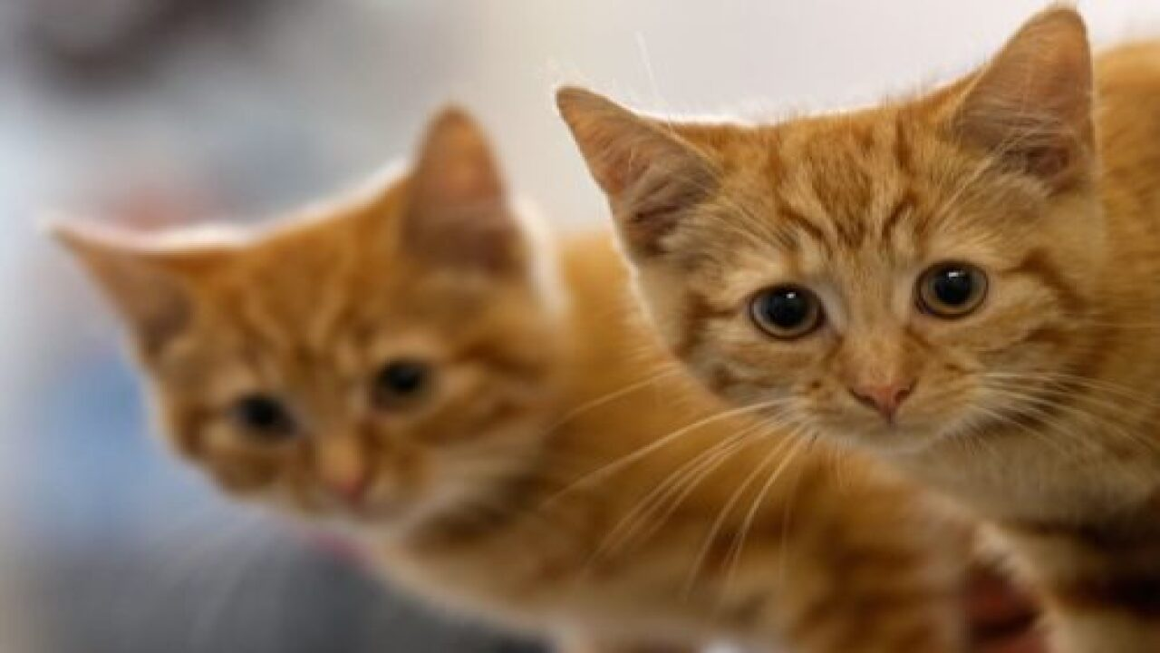 This Research Study Says Cats Mirror Their Owners' Personalities