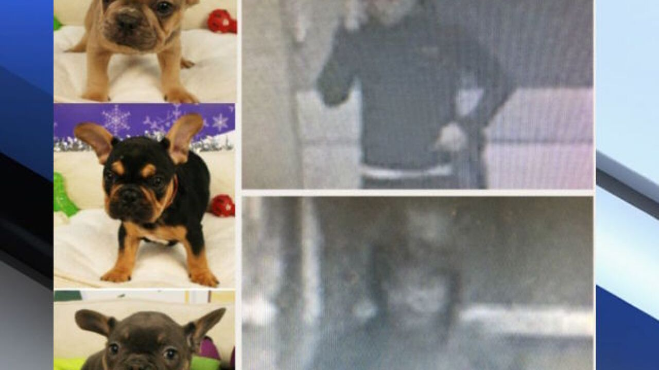 Suspects steal $30K worth of puppies in Tempe