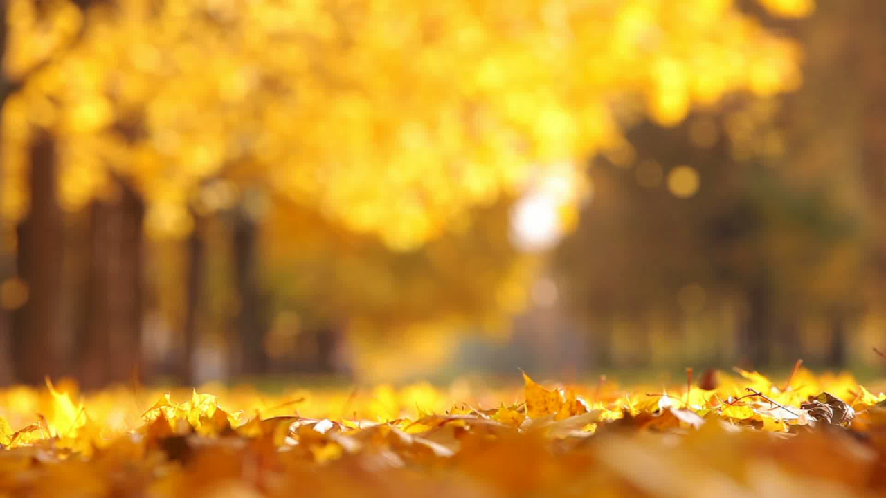 wx-falling leaves.png